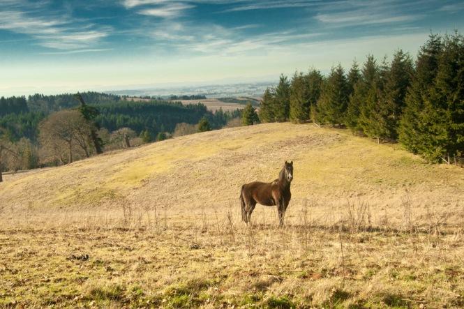 horse IMG_6063